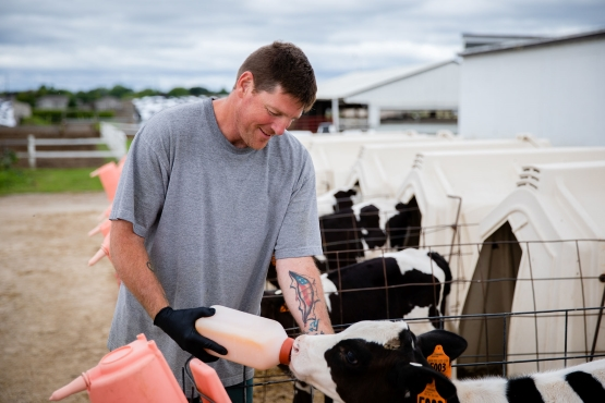 A person in a gray t- shirt is bottle feeding a calf.